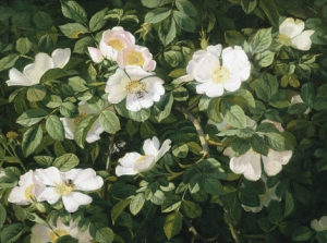 Dog Roses in Flower by Niels Peter Rasmussen